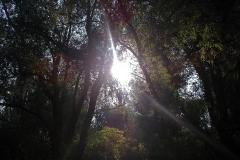 Winnaars-Stad-Natuur-KidzKlix-01