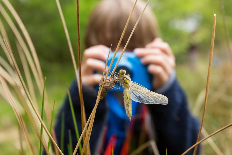 De droom van elke natuurfotograaf, een uitsluiping van een libel. En dan ben je pas 7 jaar oud!